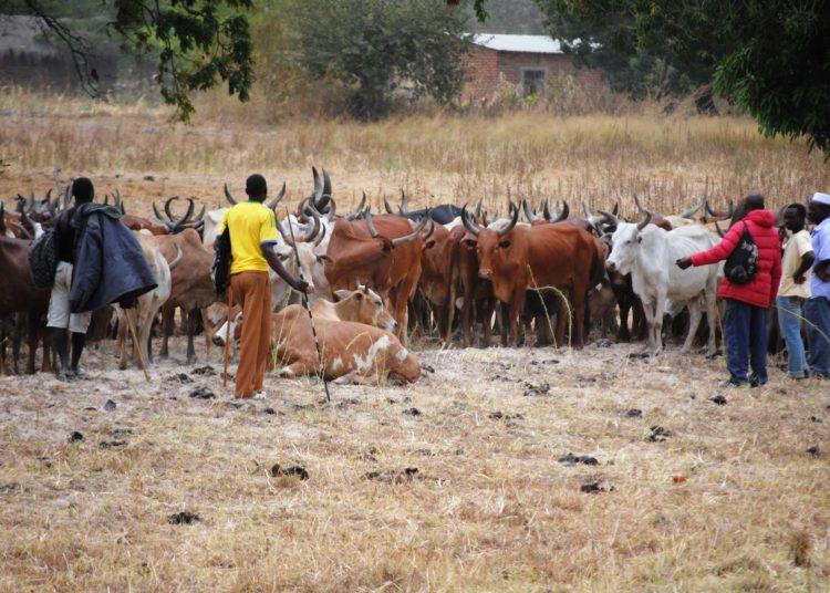 Wabunge walalamikiwa tozo kubwa mifugo